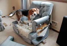 Dog Separation Anxiety Treated In Your Home By Professionally