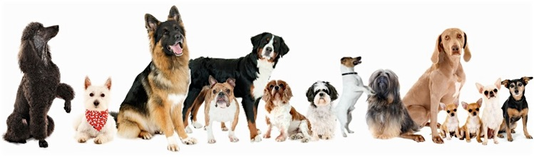 Basic Training For Dogs And Puppies